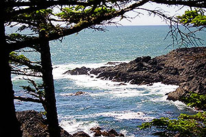 Ocean and Forest, Wild Pacific Trail, Ocean Mist Guesthouse, Ucluelet, BC