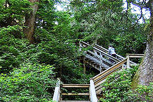Stairs to higher levels, Wild Pacific Trail, Ocean Mist Guesthouse, Ucluelet, BC